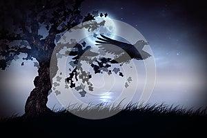 Black Ravens At Night Royalty Free Stock Image - Image: 26361346