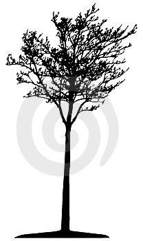 Tree (vector) Stock Photo - Image: 2644020