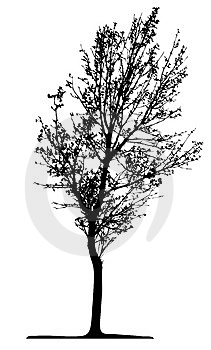 Tree (vector) Royalty Free Stock Image - Image: 2644166