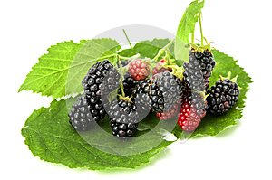 Blackberry Isolated Royalty Free Stock Images - Image: 26434669