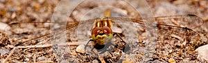 Dragonfly Royalty Free Stock Image - Image: 26457826
