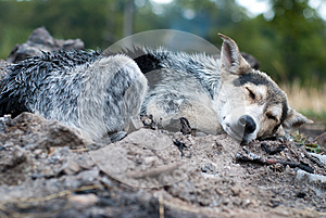 Natte Hond Royalty-vrije Stock Afbeelding - Afbeelding: 26474856