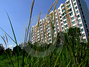 Modern Building And Grass Royalty Free Stock Photos - Image: 2658938