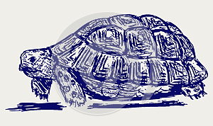 Ear Tortoise Royalty Free Stock Images - Image: 26513819