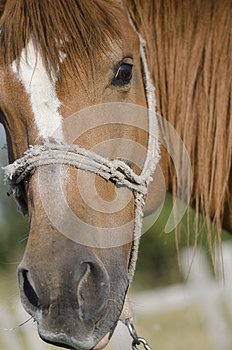 Horse Head Stock Images - Image: 26521254