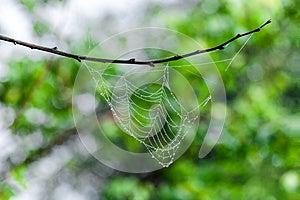 Water Drops On Cobweb Royalty Free Stock Image - Image: 26521776