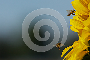 Summer Time Royalty Free Stock Images - Image: 26543229