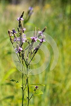 Wild Flowers Stock Image - Image: 26546201