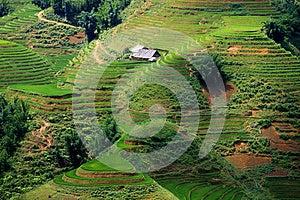 Rice Fields Stock Photos - Image: 26556683