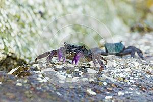 Meder Mangrove Crab Royalty Free Stock Photo - Image: 26559205