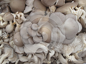 Organic Mushrooms Stock Photography - Image: 26565532