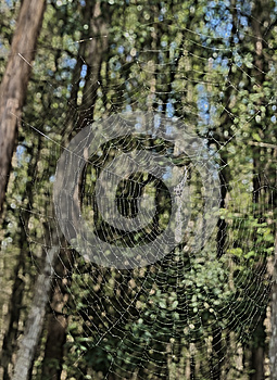 HDR Spider Web In The Forest Stock Images - Image: 26579154