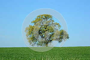 Tree Stock Images - Image: 26594824