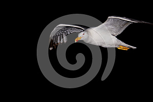 Seagul Stock Images - Image: 26604304