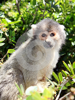 Squirrel Monkey Sitting On Tree Branch Stock Images - Image: 26615914