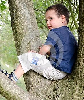 Child On Tree Royalty Free Stock Photography - Image: 26617977