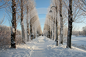 Lane In Winter Park Royalty Free Stock Photos - Image: 26621768