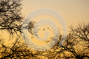 Cranes That Fly In The Evening Light Stock Images - Image: 26629534