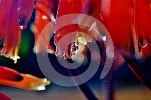 Rain Drop Royalty Free Stock Photography - Image: 26634157