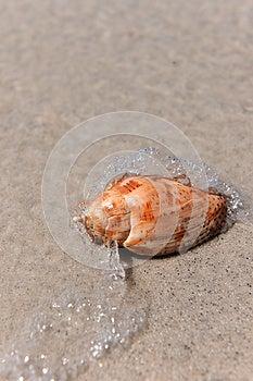 Woda Macha Chełbotanie Na Seashell Fotografia Stock - Obraz: 26634842