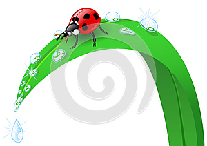 Ladybird On A Blade Of Grass Stock Photo - Image: 26653860