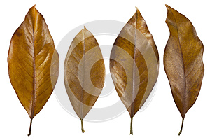 Autumn Leaves Royalty Free Stock Photo - Image: 26664255