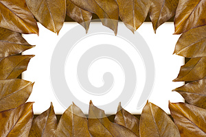 Frame Of Autumn Leaves Stock Image - Image: 26664301