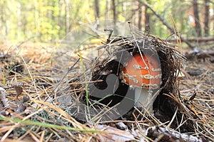 Beautiful Red Mushroom Stock Image - Image: 26716751