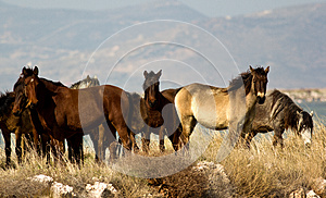 Wild Horses II Stock Image - Image: 26738551