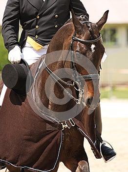Dressage Horse Royalty Free Stock Image - Image: 26754626