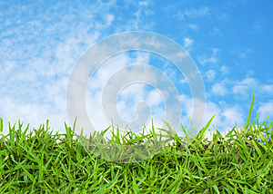 Green grass and blue sky Free Stock Photography