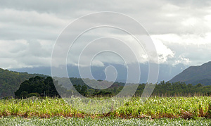 Farming Land  Covered Thundercloud. Stock Photos - Image: 26815943