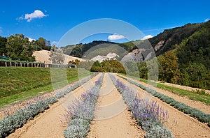 Botanical Garden Royalty Free Stock Images - Image: 26842129