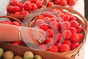 Hand Die Tomaten Kiest Royalty-vrije Stock Afbeelding - Afbeelding: 26882616