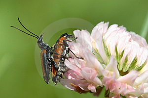 Pairing Insects Royalty Free Stock Image - Image: 2697066