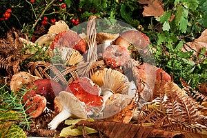 Basket With Mushrooms Stock Photo - Image: 26912460