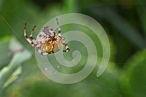 Spider Web Stock Photo - Image: 26967560