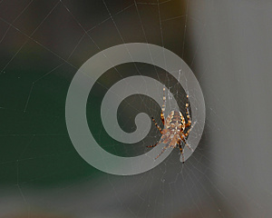Cross Spider Royalty Free Stock Photography - Image: 26967567