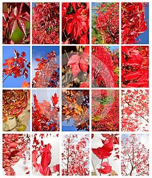 Autumn Leafs Set Stock Images - Image: 26973654