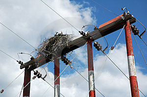 Hawk-nest Free Stock Photo