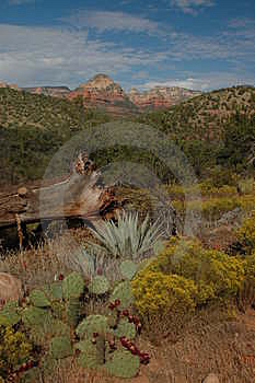 Desert Scape Stock Images