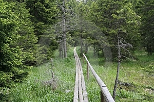 Wooden Path Free Stock Photography