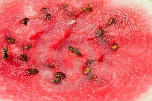 Wasp On Melon Free Stock Photo