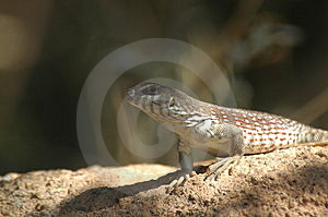 Desert Dweller Stock Photo - Image: 273000