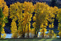 Autumn trees in front of blue river Stock Photo