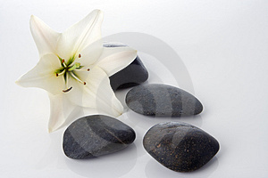 Madonna lily with spa stones Stock Images