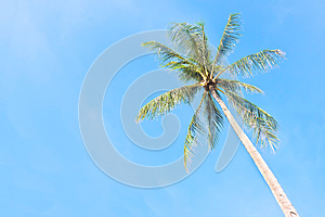 Coconut Tree Stock Photos - Image: 27071083