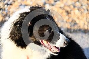 Dog Royalty Free Stock Images - Image: 27168739