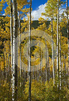 Colorado Fall-12 4063 Stock Images - Image: 27194654
