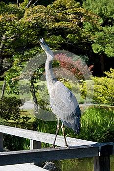 Curious Crane Royalty Free Stock Photos - Image: 27194908